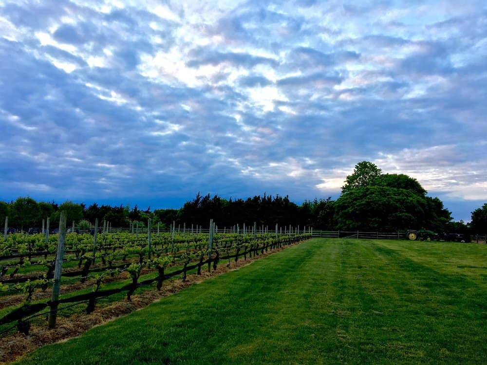 Vineyards on Long Island North Fork